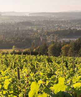 Sip, Savour & See in Cowichan